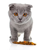 Little kitten eating pet food  on white Stock Image