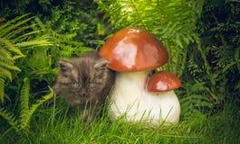 Little kitten explores the world Stock Photo