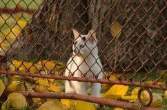 White-black cat royalty free stock image