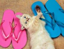 Little kitten with flip flops sandals Stock Photos