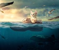 Little Kitten Floating In His Boat Boot Royalty Free Stock Photography