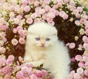 Little kitten in flowers Stock Image