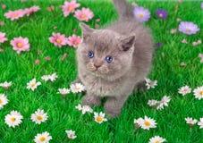Little kitten in flowers Royalty Free Stock Photos