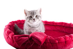 Little kitten. Royalty Free Stock Photography