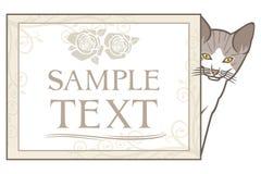 Little kitten with frame vector illustration