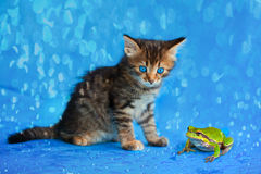 Little kitten and frog. Sitting in the rain Royalty Free Stock Photography