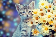 Kitten with flowers. Little kitten in the garden with flowers Royalty Free Stock Image