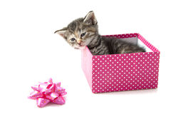 Little kitten gift Royalty Free Stock Image