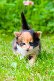 Little kitten on the grass Stock Photography