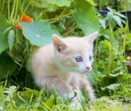 Little kitten in the grass Royalty Free Stock Photo