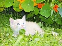Little kitten in the grass Stock Image