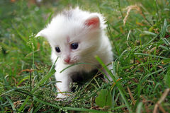 Little kitten in a grass Stock Photos