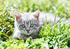 Little kitten in the grass Royalty Free Stock Image