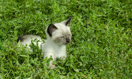 Little kitten in the grass Royalty Free Stock Photography
