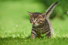 Little kitten on the grass Royalty Free Stock Photography
