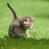 Little kitten on the grass Royalty Free Stock Images