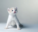 Little kitten  on a gray Stock Images