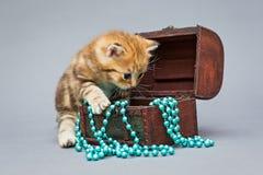 Little kitten  on a grey background Stock Image