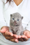 Little kitten in the hands Stock Photos