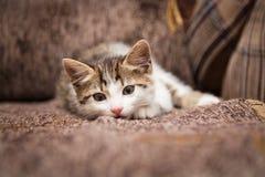 Little kitten has a rest lying. Cute little kitten has a rest lying on a chair Stock Image