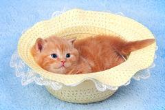 Little Kitten and the hat. Little kitten sitting in straw hat stock photography