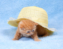 Little Kitten and the hat Royalty Free Stock Photo
