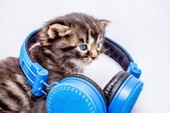 Little kitten with headphones. DJ during the disco. Listening t stock photos