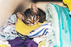Little kitten hiding in the laundry box Stock Photo
