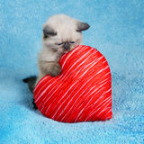 Little kitten holding red heart Stock Images