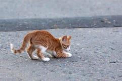 Little kitten hunt on a road Stock Photos