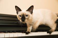 Little kitten-hunter found it's prey. Brave pussycat is hunting on the keyboard stock photo