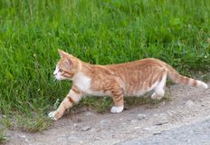 Little kitten hunting Stock Photo