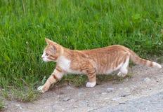 Little kitten hunting Stock Photo