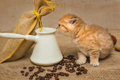 Little kitten and ingredients for coffee Royalty Free Stock Photos