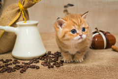 Little kitten and ingredients for coffee Royalty Free Stock Photography