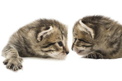 The little kitten isolated on white Royalty Free Stock Image