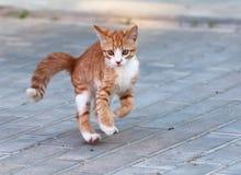 Little kitten jump. Red little kitten play on sunny day on summer royalty free stock images