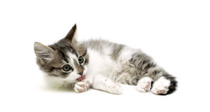 Little kitten licking its paw. Isolated on white background. Royalty Free Stock Images