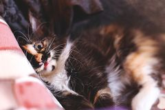 Cute funny cat royalty free stock photography