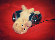 Little kitten listening music Royalty Free Stock Photos
