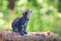 Little kitten on the log Stock Photos
