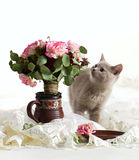 Little kitten look at flowers Stock Images