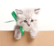 Little kitten look out from box Stock Photos