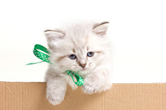 Little kitten look out from box Royalty Free Stock Photos