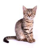 Little kitten looking at camera Stock Image