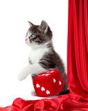Little kitten with love dice Royalty Free Stock Photography