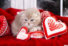 Little kitten love Royalty Free Stock Image