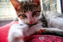 Little kitten lying on a coverlet. Small cat sleeps sweetly as a small bed. Sleeping cat stock photo