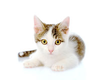 Little kitten lying in front. isolated on white background Royalty Free Stock Photo