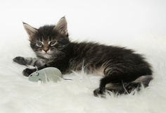 Little kitten lying on a fur rug with a toy mouse Royalty Free Stock Photo